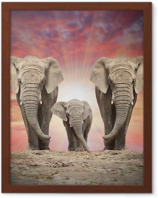 Poster en cadre Famille de l'éléphant d'Afrique sur la route.