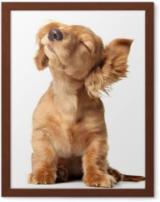 Ingelijste Poster Schattige puppy luisteren naar muziek, ook verkrijgbaar met een koptelefoon.