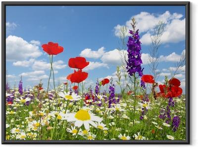 Poster en cadre Coquelicot rouge et de fleurs sauvages