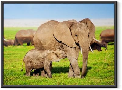 Gerahmtes Poster Elefanten Familie auf Savanne. Safari in Amboseli, Kenia, Afrika