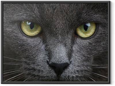 Ingelijste Poster Close-up portret van grijze kitten