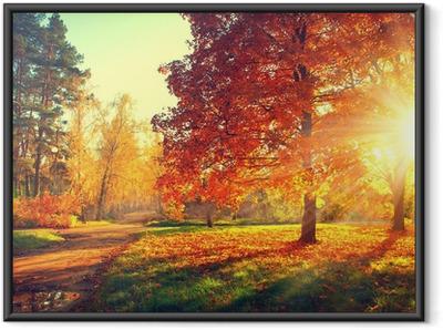 Plakat w ramie Drzewa w jesiennym świetle