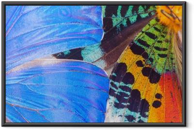 Çerçeveli Poster Renk renk kelebekleri kanat