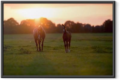 Gerahmtes Poster Mutter Pferd mit Fohlen auf Ackerland bei Sonnenuntergang. geesteren. achter