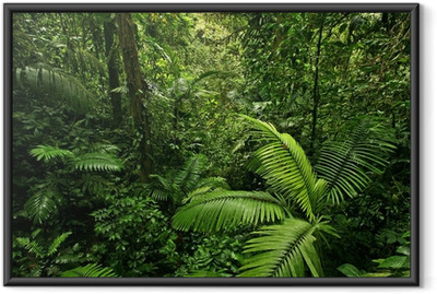 Ingelijste Poster Dichte Tropisch Regenwoud