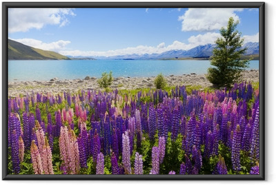 Gerahmtes Poster Lupin Flowers