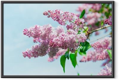 Poster en cadre Lilas - Plantes