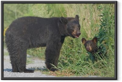 Black bear mother with cub. Alligator River NWR Framed Poster