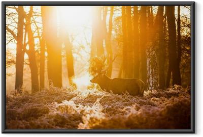 Punainen peura aamulla auringossa. Kehystetty juliste