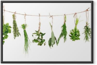 Poster en cadre Les herbes fraîches suspendu isolé sur fond blanc - Herbes