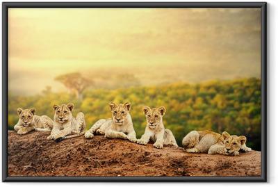 Gerahmtes Poster Löwenbabys warten zusammen.