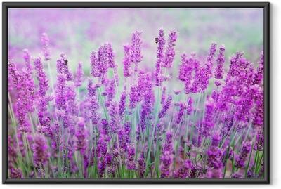 Poster i Ram Lavendel