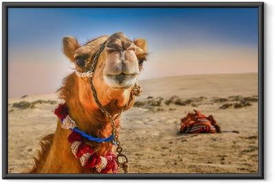 Gerahmtes Poster Detail des Kopfes Kamels mit lustigen expresion