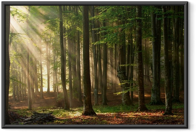 Ingelijste Poster Zonnestralen in een bos