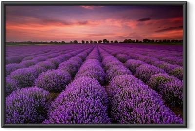 Poster en cadre Paysage magnifique avec un champ de lavande au coucher du soleil