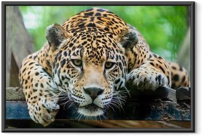 Sydamerikanske jaguar Indrammet plakat