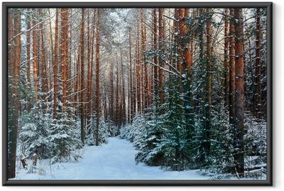 Poster en cadre Une forêt de pins, hiver, neige