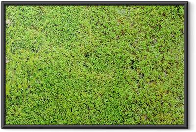 Green moss background Framed Poster