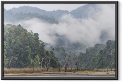 Morgen tåge og døde træer i tæt tropisk regnskov, Perak, Malaysia Indrammet plakat