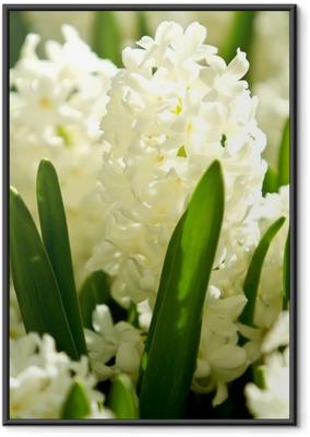 Ingelijste Poster Witte hyacinten