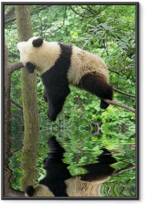 Panda Kehystetty juliste