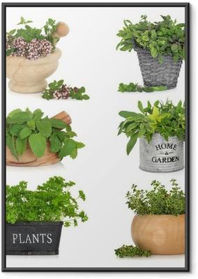 Poster en cadre Herbes dans des conteneurs - Herbes