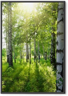 Gerahmtes Poster Sommer Birkenwälder mit Sonne