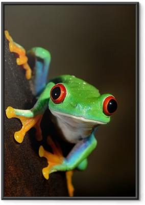 Plakat w ramie Czerwonych oczu żaba Agalychnis callidryas w terrarium