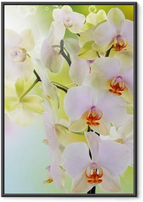 Plakat w ramie Piękne kwiaty japońskie Orchid.Beauty.Flora