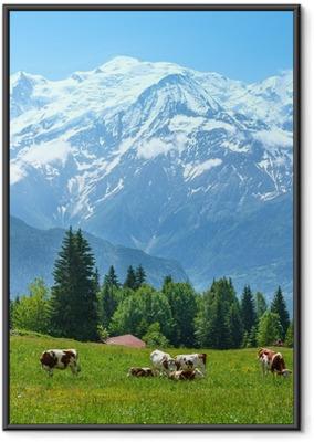 Ingelijste Poster Kudde koeien op open plek en de Mont Blanc-massief uitzicht