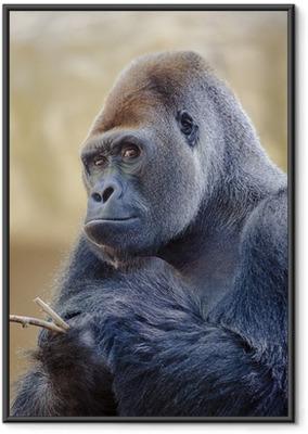 Poster en cadre Silverback Gorilla
