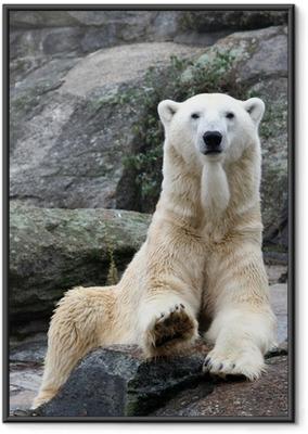 Poster in Cornice Orso polare ritratto