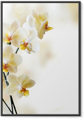 Beautiful white orchid Framed Poster