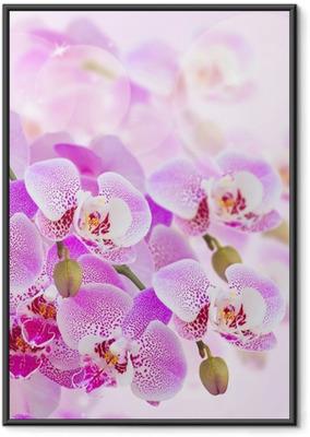 Plakat w ramie Różowa orchidea oddział bliska