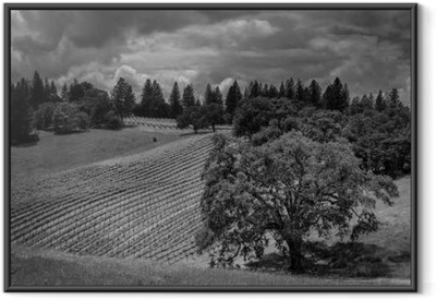 Shake Ridge Ranch Vineyards Framed Poster