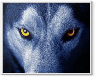 Ingelijste Poster Mooie ogen van een wilde wolf.