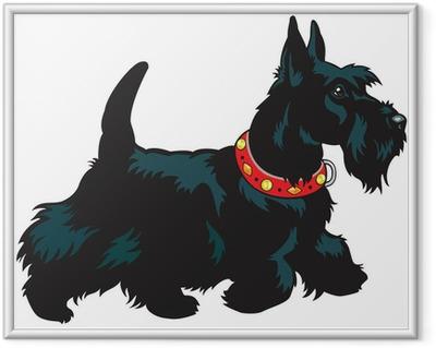 Poster en cadre Scottish terrier - Sticker mural