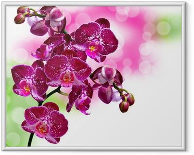 Gerahmtes Poster Nahaufnahme der Orchideenblüte