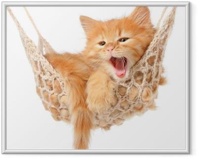 Ingelijste Poster Schattige roodharige kitten in hangmat