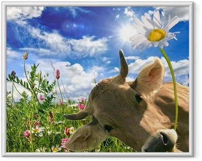 Poster en cadre Joyeux anniversaire: vache donne une fleur :)