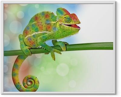 Plakat w ramie Kameleon i kolory