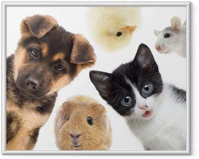 Gerahmtes Poster Welpen und Kätzchen und Meerschweinchen
