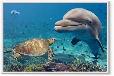 Ingelijste Poster Dolfijnen en schildpad onderwater op ertsader