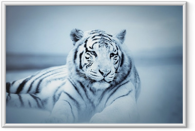 Poster en cadre Tigre - Thèmes