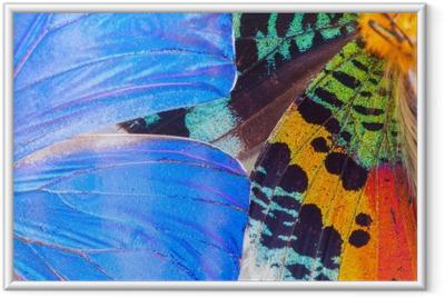 Ingelijste Poster Veelkleurige vlinders vleugel