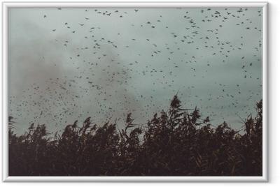 Póster com Moldura Bando de pássaros voando perto de cana num estilo vintage-céu escuro preto e branco
