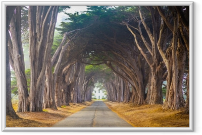 Point Reyes Cyress Tree Tunnel Framed Poster