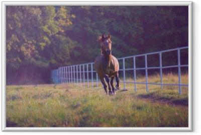 Póster com Moldura Cavalo de Brown galopa no fundo árvores ao longo da cerca branca no verão