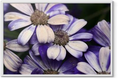 Plakat w ramie Kwiat bliska