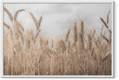 Póster Enmarcado Campo de trigo en tonos sepia